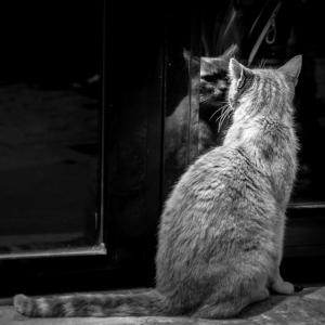 Observarea de sine si Tarotul